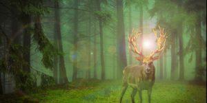 natuur hert lichtje zien